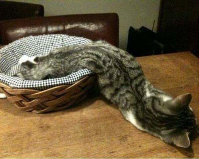 It's So Hot, Even The Cat Has Melted...