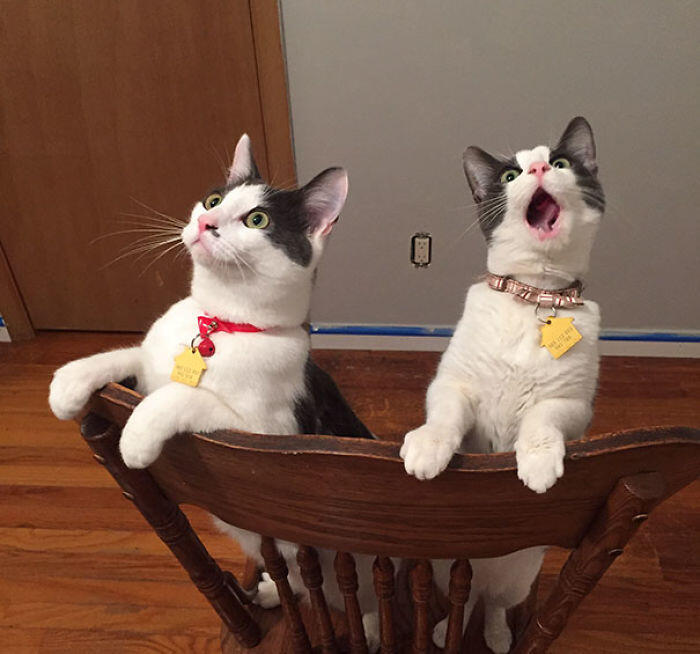 My Cats' Reaction To Seeing The Ceiling Fan Move For The First Time