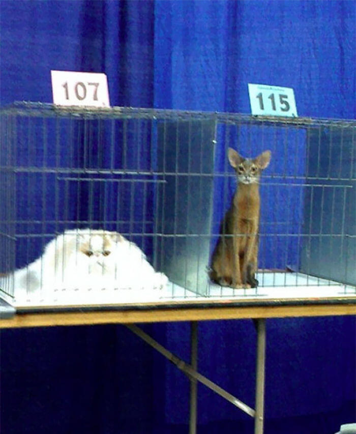 Different Breeds Of Cats Have Different Melting Points